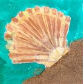 8th grade okeefe shell lesson