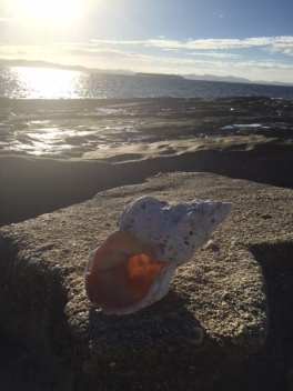 shell I found on namotu island fiji